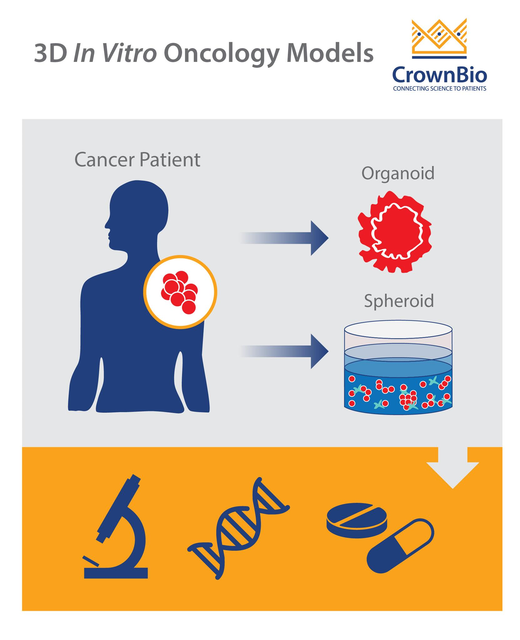 derivation of 3d spheroid and organoid in vitro models from human patient tumors