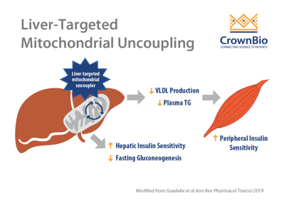 liver targeted mitochondrial uncoupling by CRMP for fatty liver, NAFLD, and type 2 diabetes