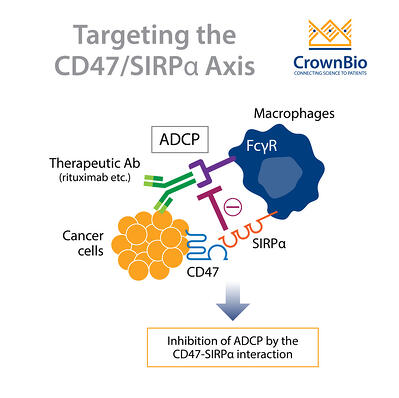 therapeutic antibody blocking the CD47-SIRPα interaction to inhibit ADCP
