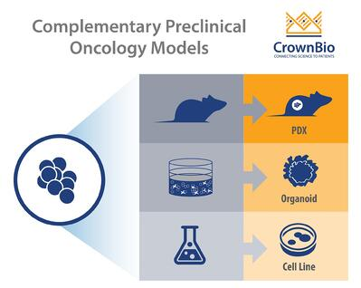 Tumor-derived cell lines, organoids, PDX - complementary preclinical models for drug screeningand oncology research