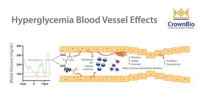 graphic showing the effects of hyperglycemia on blood vessels