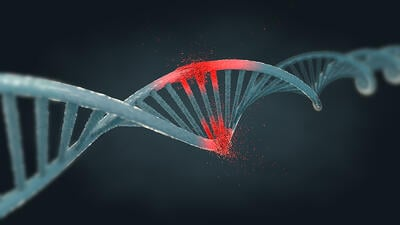 damaged DNA triggering a DNA damage response and DNA repair mechanisms