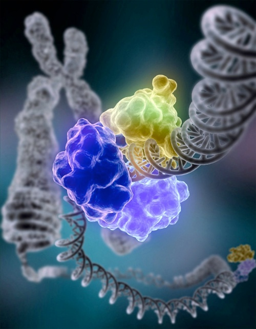 dna repair complex on dna, parp inhibitor 2017 review, data update and FDA approvals