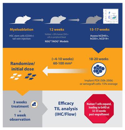 hCD34+ HSC humanized mouse model immuno-oncology study design flowchart