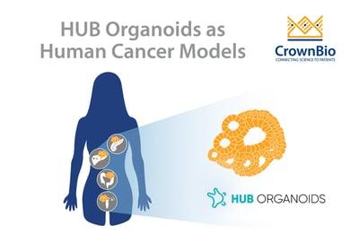 HUB Organoids as human cancer models