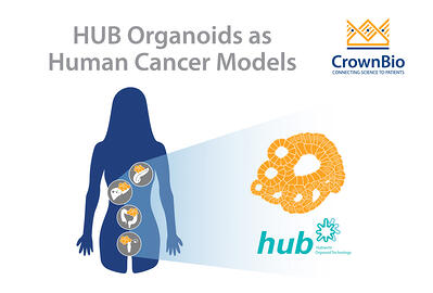 HUB Organoids as human cancer models