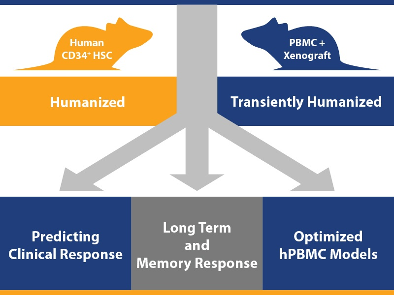 humanized mouse immuno-oncology model enhanced applicable uses, HSC, PBMC, immunotherapy preclinical assessment platform