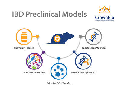 main IBD preclinical mouse model types including chemically induced, adoptive T cell transfer, genetically engineered models