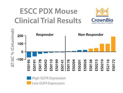 PDX Study Investigates Cetuximab for Esophageal Cancer
