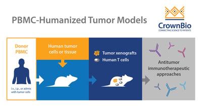 infographic of tumor bearing, PBMC humanized mouse model development