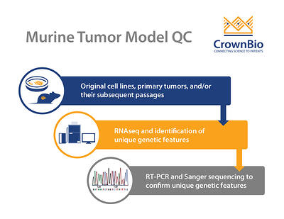 murine tumor oncology model quality control process