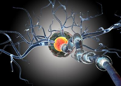 nerve cells, multiple sclerosis, preclinical multiple sclerosis models, MS