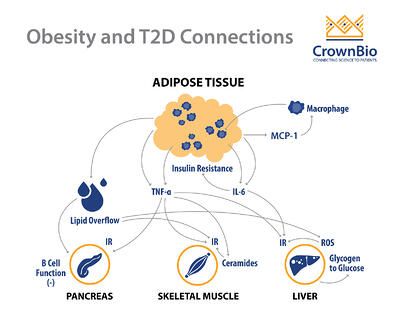 graphic exploring the connection between obesity and type 2 diabetes