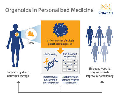 Patient-Derived Organoids (PDOs) for Personalized Cancer Research