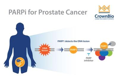 PARP inhibitors (PARPi) in prostate cancer treatment