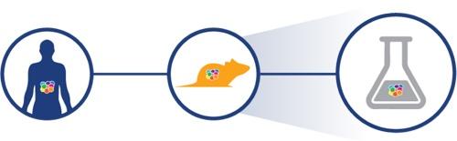 pdx models in vitro assays, ex vivo assays, patient-derived xenograft compound screening, high throughput pdx
