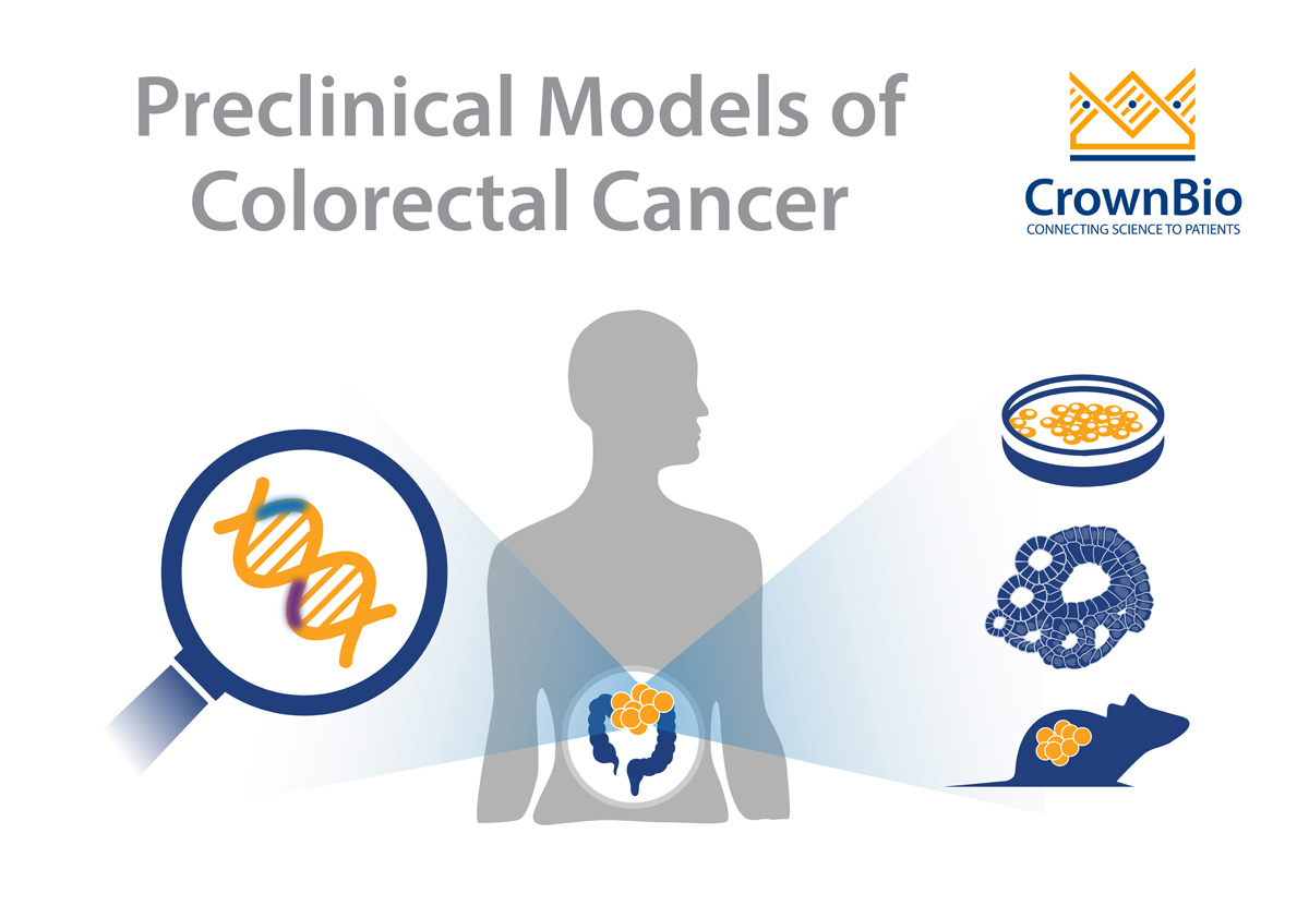 Modeling Oncogenic Ras And Braf Mutations Using Colorectal Cancer Organoids