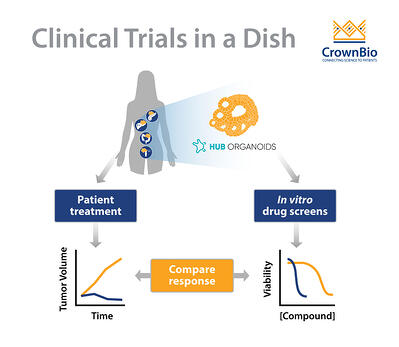 Predicting Clinical Treatment Responses Using HUB Tumor Organoids in a Clinical Trial in a Dish