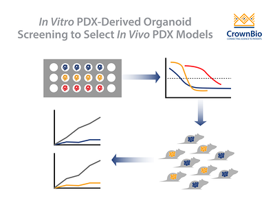 Select the Right In Vivo PDX Using PDX-Derived Organoids (PDXO)