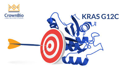 targeting KRAS and KRAS G12C mutations in oncology drug development