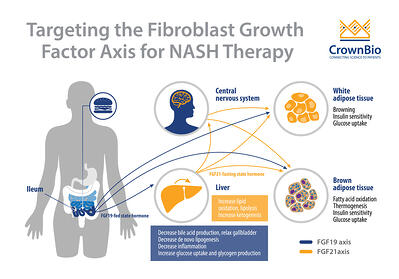 Targeting the Fibroblast Growth Factor Axis for NASH Therapy