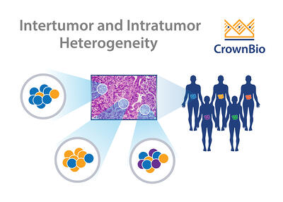 example graphic showing patient intratumor and intertumor heterogeneity