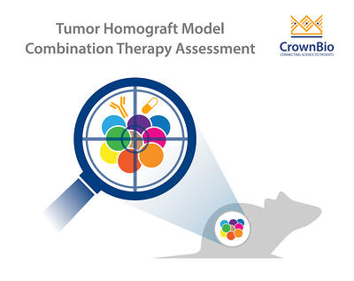 Representative preclinical tumor homograft model for assessing combination therapies including immunotherapy and targeted agents
