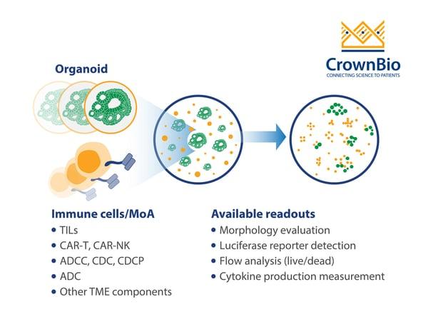 CrownBio tumor organoid and autologous immune cell co culture