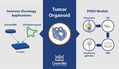 applications of tumor organoids for immuno-oncology studies and drug screening using PDX-derived organoids (PDXO)