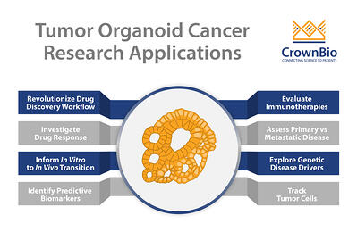 tumor organoid applictions cancer research