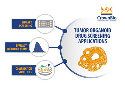 tumor organoids for drug screening applications including library screening, efficacy quantification, combination strategy evaluation
