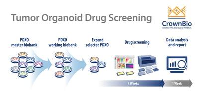 tumor organoid workflow of oncology high throughput drug screening