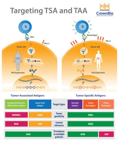 targeting tumor specific antigens and tumor associated antigens