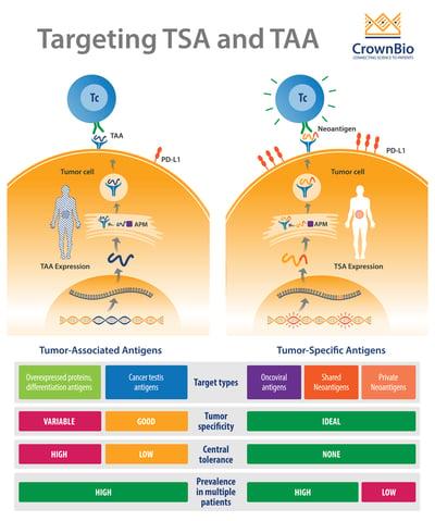 targeting tumor specific antigens and tumor associated antigens