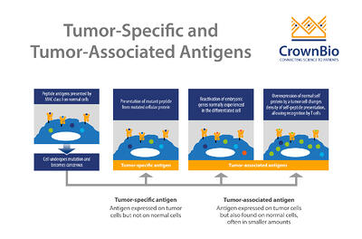 the difference between tumor specific antigens and tumor associated antigens based on tumor and normal cell expression