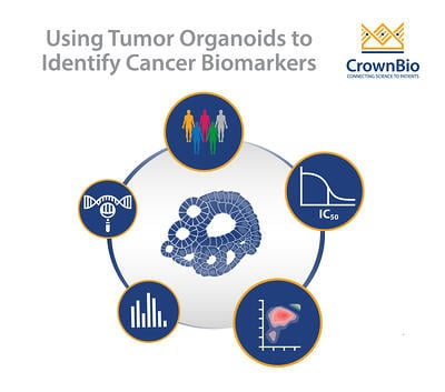 Using Tumor Organoids to Identify Cancer Biomarkers