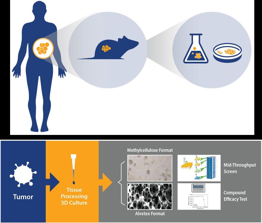 patient-derived xenograft drug discovery, in vitro ex vivo faq, pdx drug development