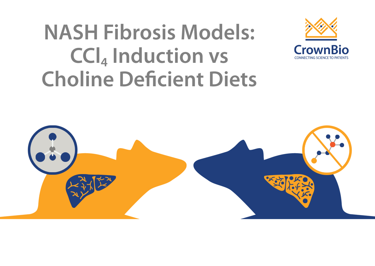 Comparison Guide: Carbon Tetrachloride Induction and Choline Deficient Diet Models