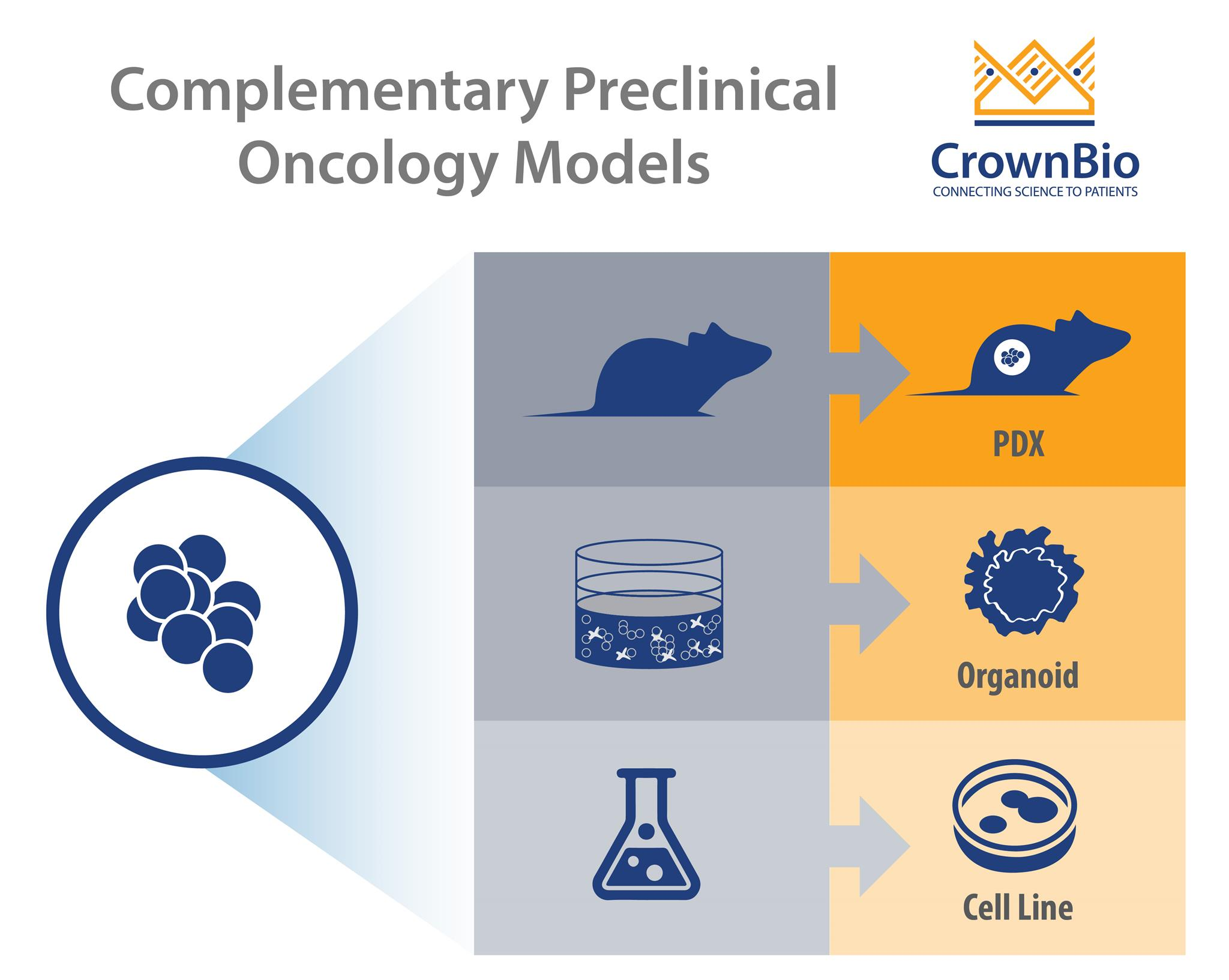 Where Do Organoids Fit in Preclinical Cancer Modeling?