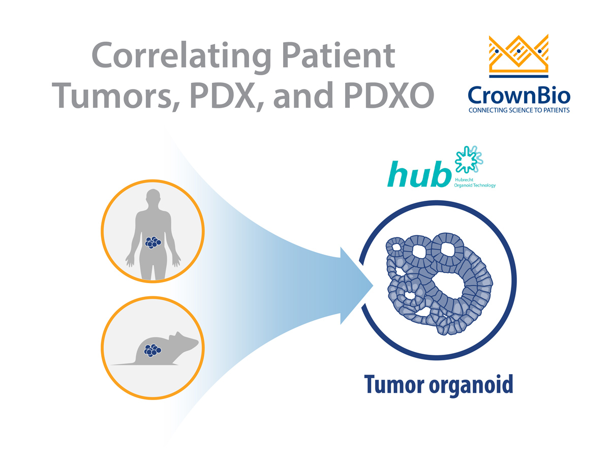 Patient Tumors, PDX, and PDXO: Model Correlation Q&A