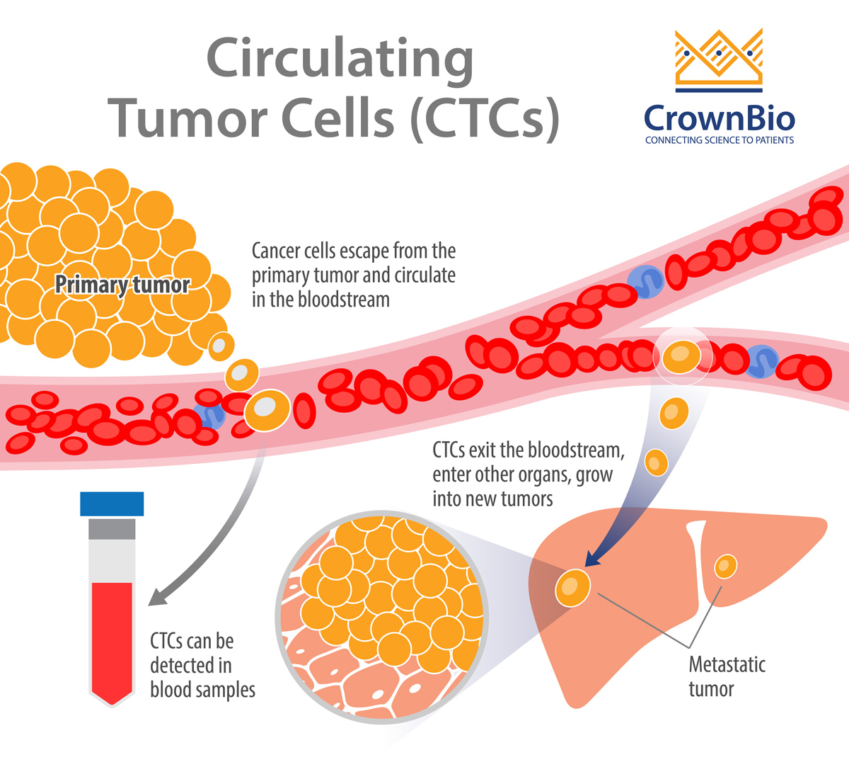 Circulating Tumor Cells in Preclinical Mouse Models of Metastasis
