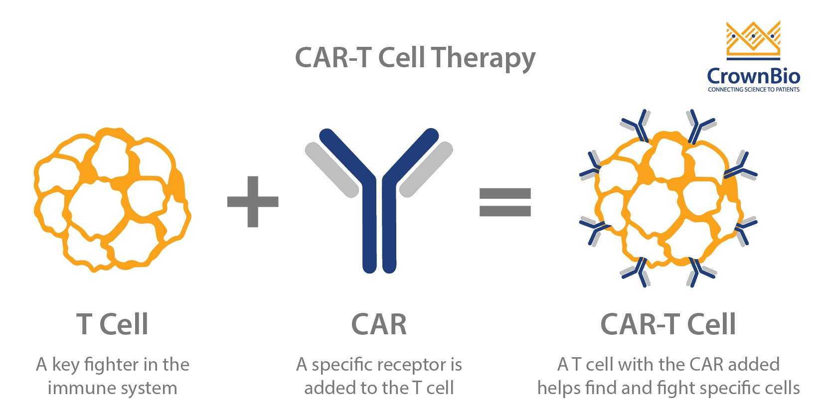 How To Assess Car T Cell Therapies Preclinically
