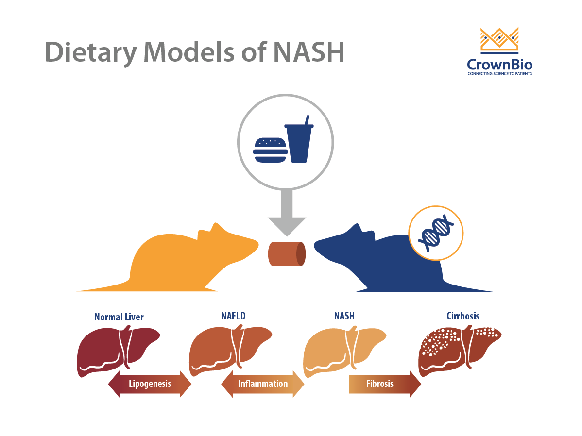 Dietary Mouse Models of NASH: Comparing the AMLN Diets and the MS-NASH Mouse