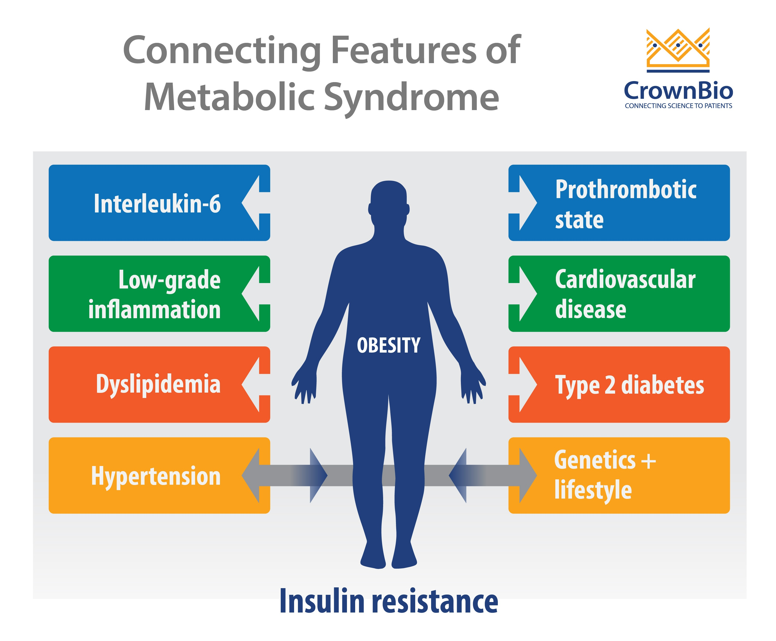 Connecting Inflammation, Diabetes, and Obesity