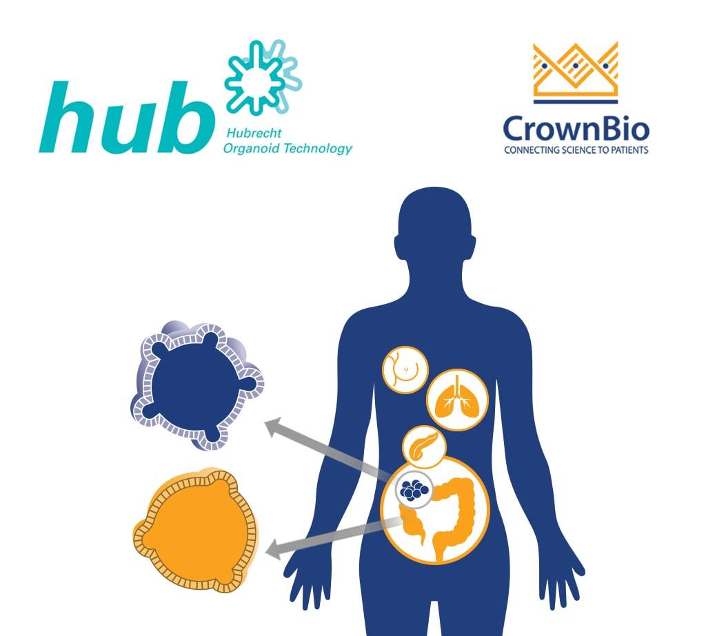HUB Tumor Organoids: Top 15 Questions