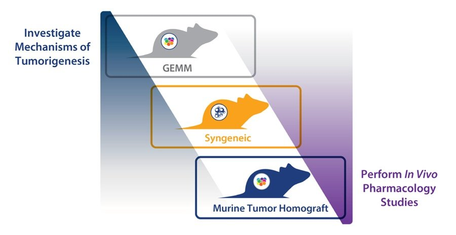 Immunocompetent mouse models for immunotherapy assessment, syngeneics and murine tumor homografts immuno-oncology efficacy assessment, GEMM MoA