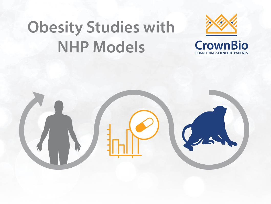 Safety and Efficacy Testing of Anti-Obesity Drugs with NHPs