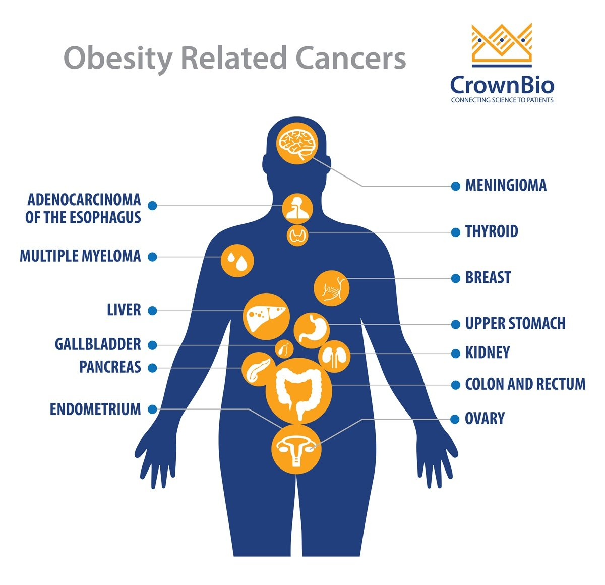 Obesity, Cancer Development, and Immunotherapy Response