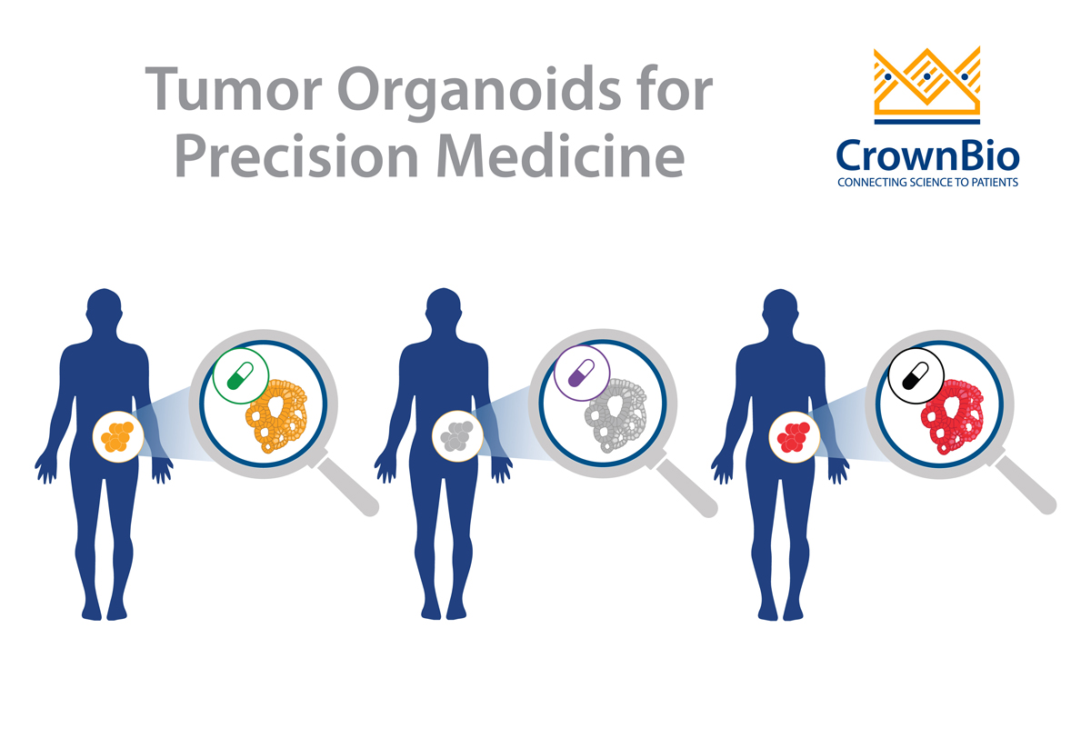 The Role of Patient-Derived Tumor Organoids in Precision Medicine
