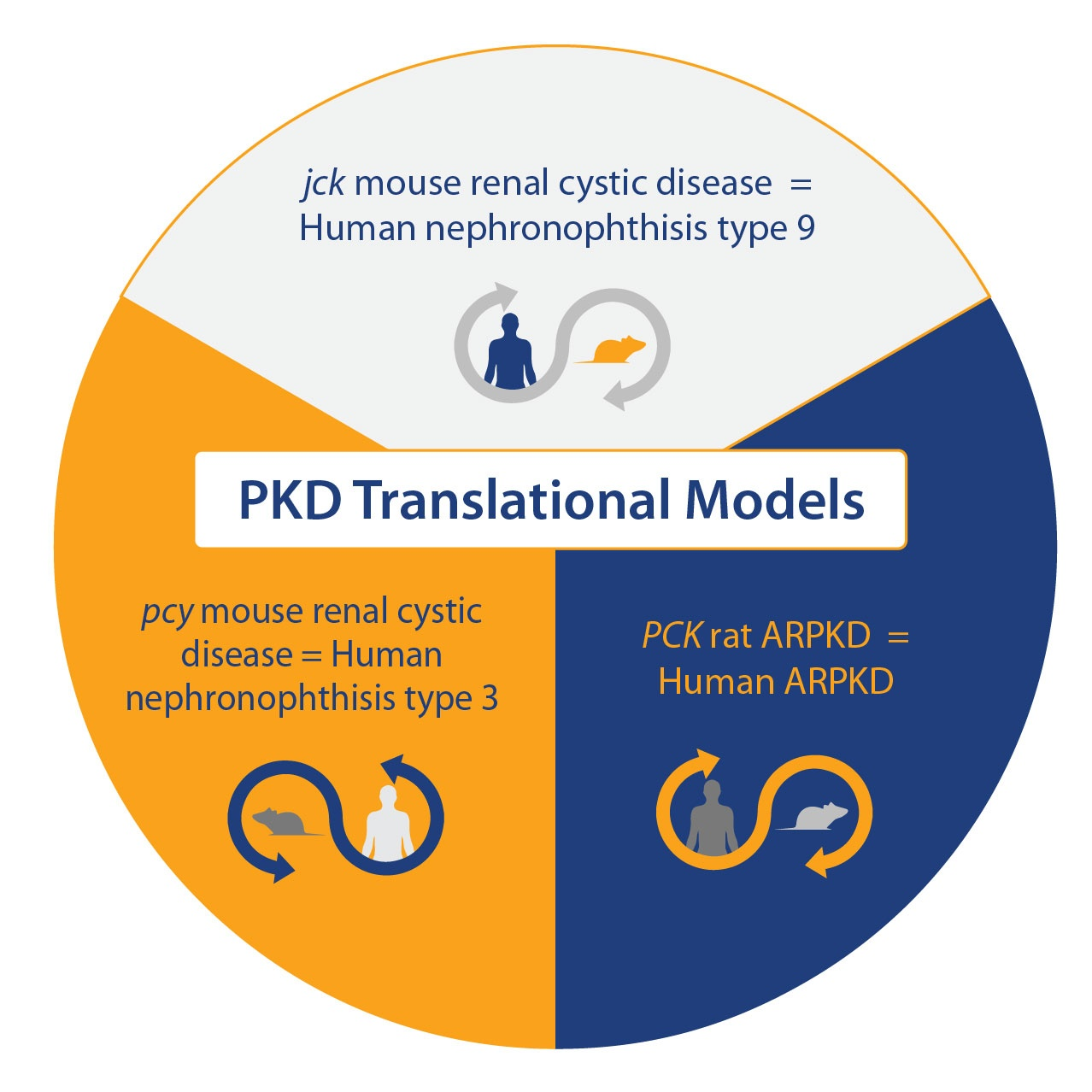 Polycystic Kidney Disease (PKD): The Argument for Multiple Rodent Models
